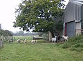 Sheep and goats at Pallance Farm - geograph.org.uk - 571689.jpg