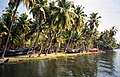 Shore on the Kerala backwaters (6099994610).jpg