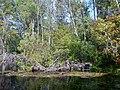 Silver Springs - panoramio (8).jpg