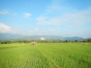 Cordillera Central (Luzon) - Image: Sison Pangasinanjf 847