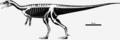 Skeletal reconstruction of Buriolestes schultzi.png