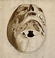 Skull seen from below. Pen and ink wash drawing by C. Landse Wellcome V0008295.jpg