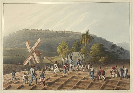 Planting the sugar cane, British West Indies, 1823 Slaves working on a plantation - Ten Views in the Island of Antigua (1823), plate III - BL.jpg