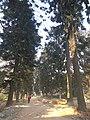 Sleṣmāntak Forest.jpg