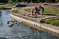 Sliapianka water system (Minsk, Belarus) — birds 14.jpg
