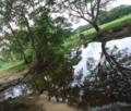 Small lake amidst a farmland.png