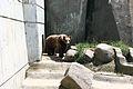 Sofia Zoo E91.jpg
