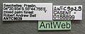 Solenopsis mameti casent0188899 label 1.jpg