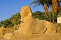 Sphinx at sunset ... (36309954802).jpg