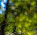 Spider Web (30003252485).jpg