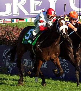 Stephanies Kitten American-bred Thoroughbred racehorse