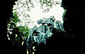 Stone forest 1983-15.jpg