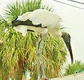Stork on a thin hot roof... - La cigogne sur un toît brulant... - panoramio.jpg