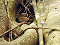 Sulawesi trsr DSCN0271 v1.JPG