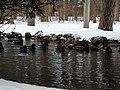Sulphur Springs Walk (47162622462).jpg