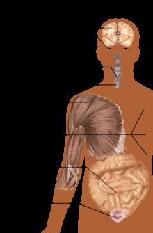 sygdom sclerose