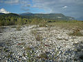 Tagliamento from magredo to wood.JPG
