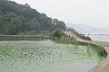 Taihu (Lake Tai), Wuxi, China.jpg