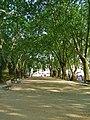 Telhado de folhas (350564919).jpg
