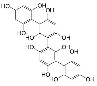 Phlorotannin