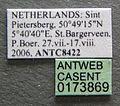 Tetramorium impurum casent0173869 label 1.jpg
