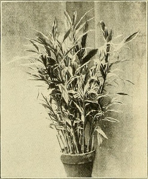 File:The American florist - a weekly journal for the trade (1907) (17952661608).jpg