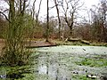 The Duckweed covered pond at the end of March - geograph.org.uk - 1376395.jpg