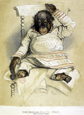 Sketch of the female orangutan known as Jenny sitting in a chair