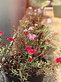 The Incredible of Mini Flowers.jpg