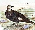 The birds of Australia (16839236676) (cropped).jpg