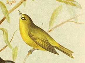 Description de l'image The birds of Australia (16917107412) (cropped).jpg.