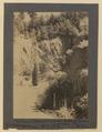 The sunken garden (looking south), Butcharts Gardens, Victoria, British Columbia (HS85-10-42132) original.tif