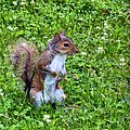 The young squirrel - panoramio.jpg