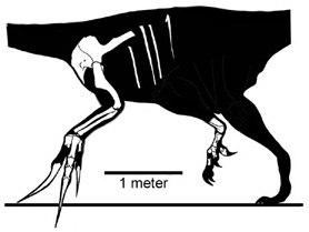 Therizinosaurus known material