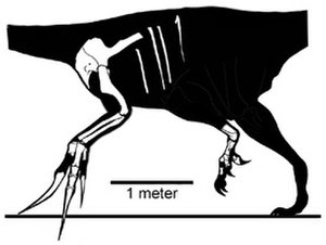 Therizinosaurus - Skeletal reconstruction showing known elements