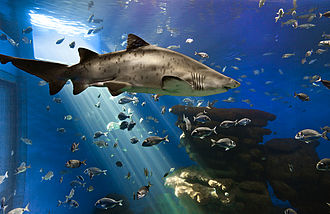 "Palma Aquarium - Palma Aquarium, the ""Big Blue"" tank"
