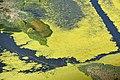 Tisza-tó, légi felvétel.jpg
