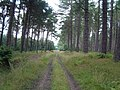 Track through the trees - geograph.org.uk - 97416.jpg