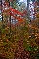 Trail (1583828417).jpg
