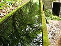Trail to Lago do Fogo, São Miguel Island, Azores - panoramio - Eduardo Manchon (18).jpg