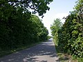 Tree-lined road near Chrishall Grange - geograph.org.uk - 801714.jpg