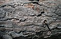 Tree Bark Texture DTXR-WD-BK-3.jpg