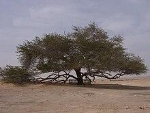شجرة الحياة ( البحرين ) 220px-TreeofLife