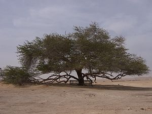 Wildlife of Bahrain - The Tree of Life