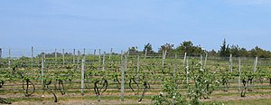 Truro, Massachusetts - The Truro Vineyards in North Truro