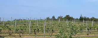 Truro, Massachusetts - The Truro Vineyards in North Truro