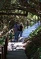 Tsitsikamma forest walkmedium.jpg