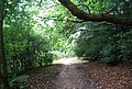 Tunbridge Wells Circular Path in the trees near Forge Farm - geograph.org.uk - 1493141.jpg