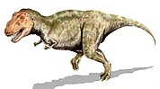 Tyrannosaurus rex, one of the largest land predators of all time lived during the late Cretaceous.
