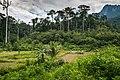 USAID Measuring Impact Conservation Enterprise Retrospective (Philippines; Nagkakaisang Tribu ng Palawan) (39395880095).jpg